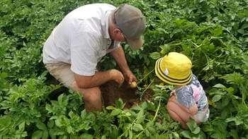 Finanziamenti BEI da 700 milioni per agricoltura: Photocredit: NT Franklin da Pixabay