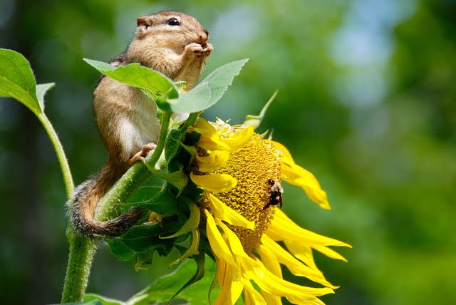 Biodiversità - Photo credit: Foto di Evita Ochel da Pixabay
