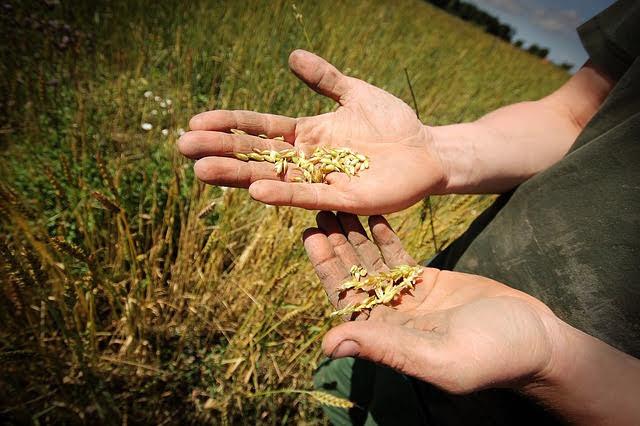 Agricoltura - Photo credit: Foto di Håkon Fossmark da Pixabay