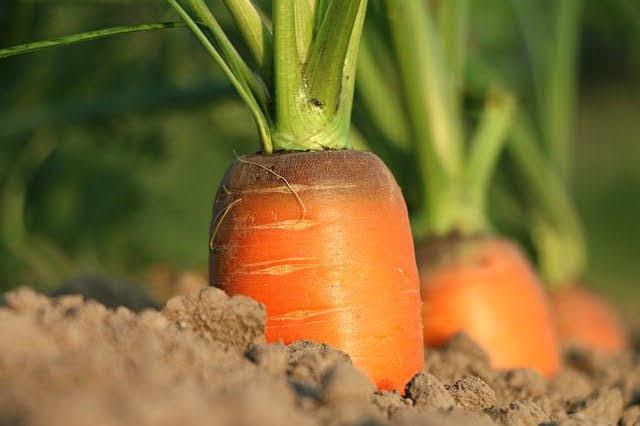 Cambiale agraria ISMEA - Photo credit: Foto di klimkin da Pixabay