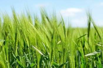 Agricoltura - Photo credit: Foto di Free-Photos da Pixabay