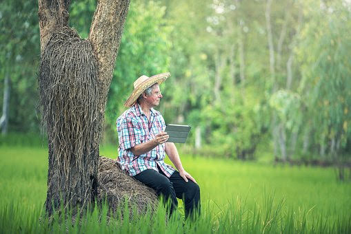 Agricoltura - Photo credit: Foto di Sasin Tipchai da Pixabay