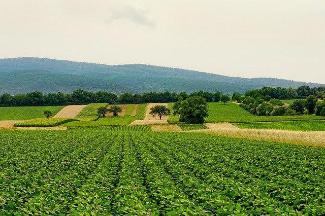 Agricoltura - Photo credit: Foto di Schwoaze da Pixabay