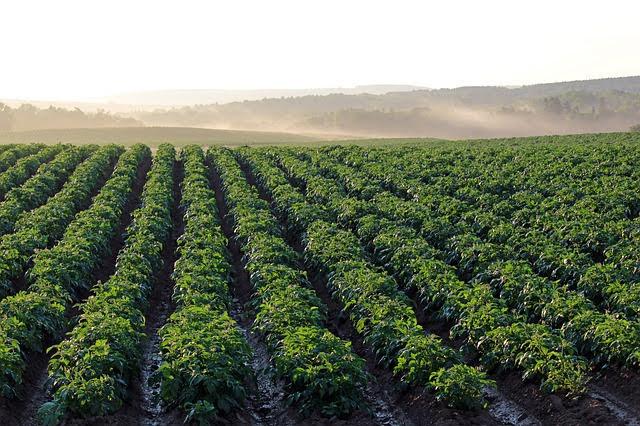 Agricoltura - Photo credit: Foto di Henry Gartley da Pixabay