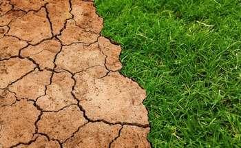 Mission Soil - Photo credit: Foto di Tumisu da Pixabay