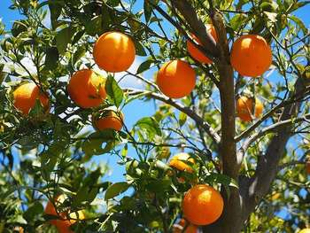 Agricoltura - Foto di Hans Braxmeier da Pixabay